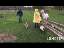 Happy Farmy farm 💛