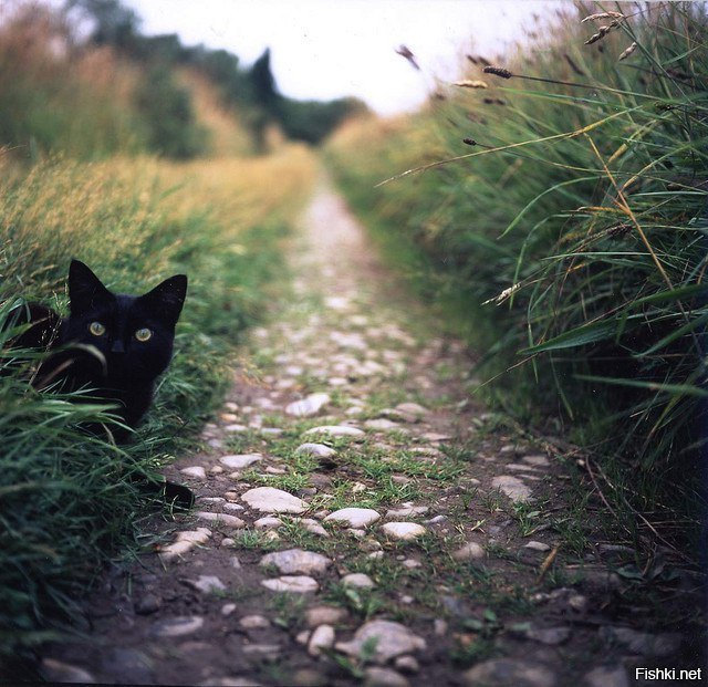 Кот на тропинке