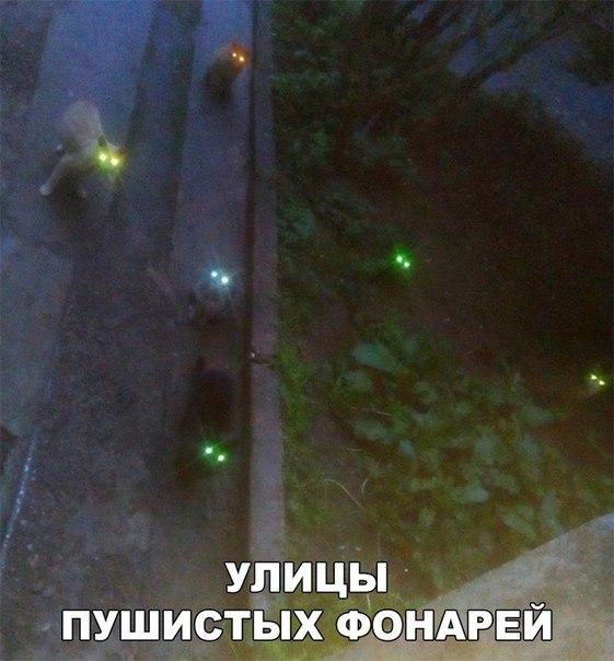 Улицы пушистых фонарей