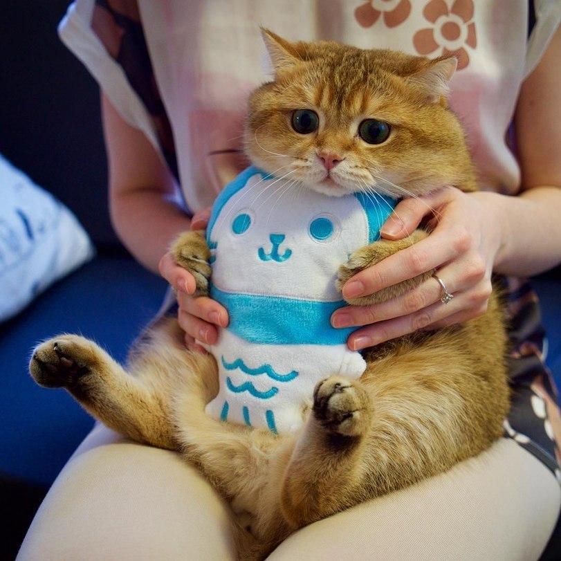 Чтобы котя не испачкал свой плюшевый живот