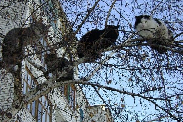А на дворе почти весна. Коты уж с юга прилетели...