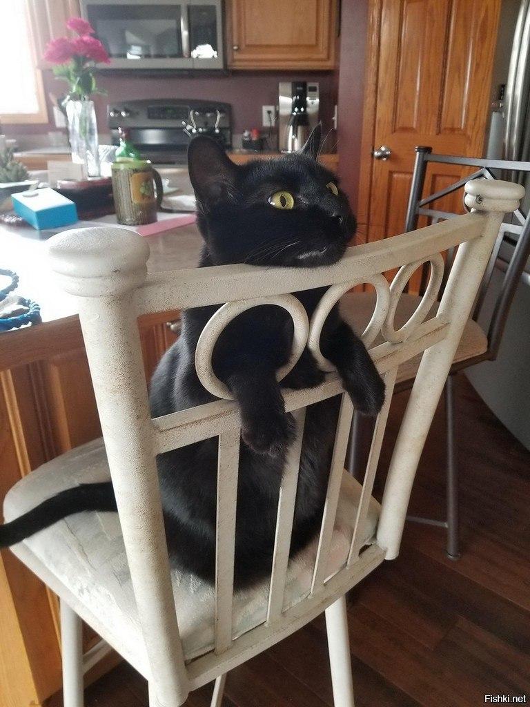 Чёрный кот на стуле