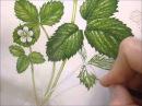 Botanical Illustration of a Wild Strawberry by Lizzie Harper
