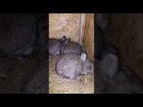 Обзор моего мини хозяйства/калифорнийские кролики/