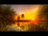 Halftribe - Daydreams In Low Fidelity