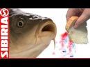 СУПЕР хлеб для рыбалки насадка на карася и белую рыбу Пылящий хлеб Как насадить