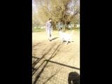 я рыдала)) позитивное видео от наших мальчиков)) Антоша и Асайка