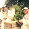 МЁД, пчелопродукты, свечи из вощины, чай из трав
