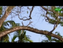 В дебрях Индии 5 Затерянный мир Индии Познавательный природа животные 2011