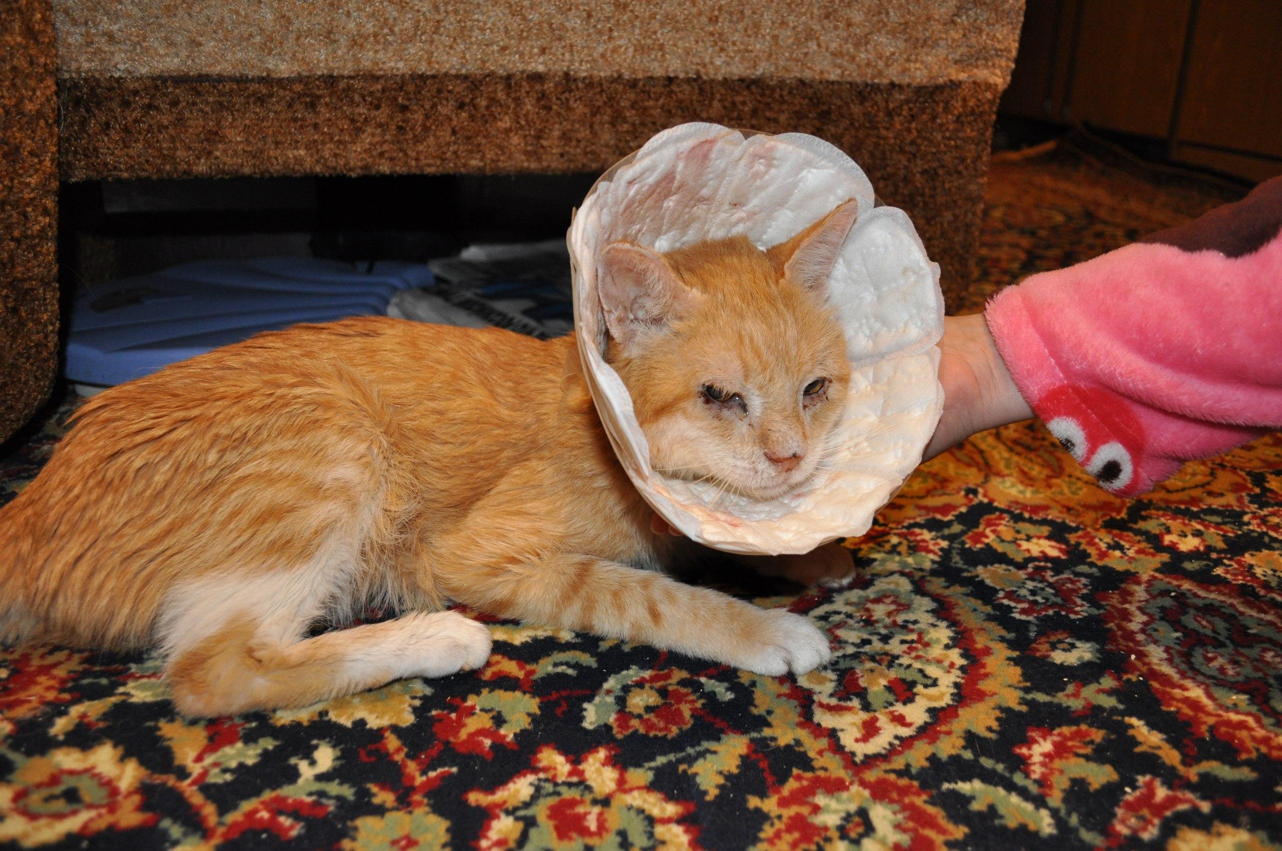 Кот много ест и его рвет