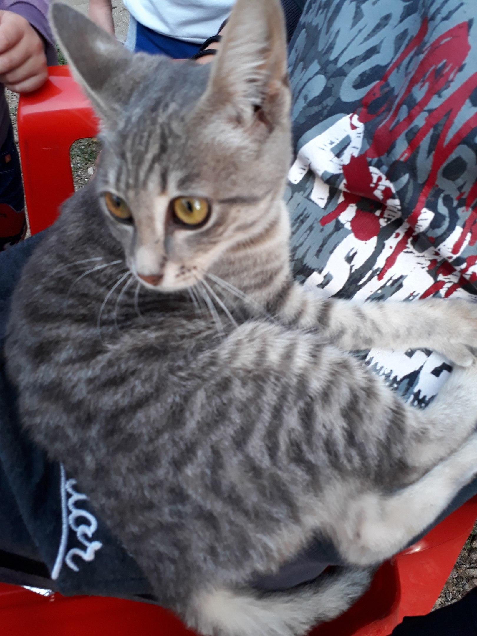 Она всё ещё ждёт своего хозяина, что бы стать ему верным другом))))) Ласковая, дымчатая кошечка, очень милая, не привередливая, живёт пока в подъезде на коврике((((