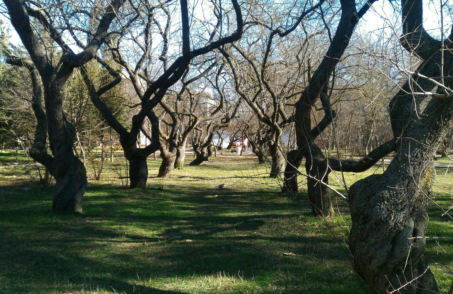 Парки на Остряках