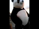 О,привет,панда!