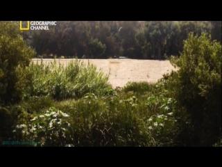 «В ожидании конца света (02). Пули, много пуль» (Реальное ТВ, 2012)