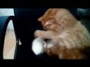 Ёжик и кот делят кресло.