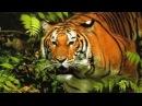 Дикие джунгли. Хищники и жертвы. Мир животных. National Geographic.