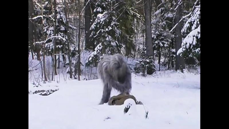 Русские страшилки - [2 серия] Йети со свалки