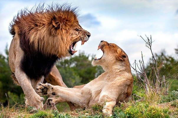 Искусство семейной ссоры