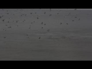 Вид с окна отеля Форт Нокс. Дельфины гоняют рыбу
