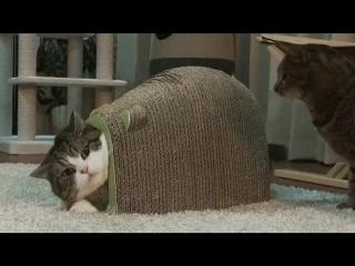 Что там? Что там сзади? ЧТО