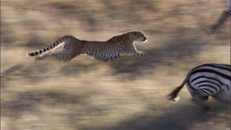 BBC Life 2009 - 7 - Hunters and Hunted [Жизнь - Охотники и жертвы]
