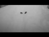 Семья медведей прогуливается по горнолыжной трассе на Красной Поляне