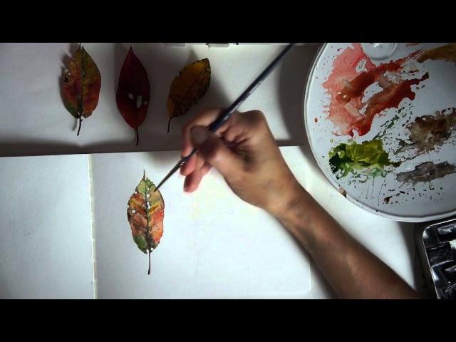 Реалистичные осенние листья акварелью