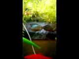 В моём аквариуме