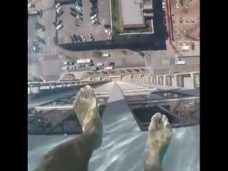 Прозрачный бассейн на краю 42-этажного небоскрёба Market Square Tower
