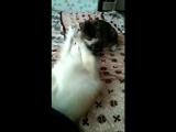 Зойдберг и кот степа)