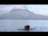 Романтическое свидание медведей на фоне пейзажей Камчатки