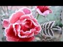 Агурбаш Анжелика - Роза на снегу- клип создан Татьяной Трифоновой г. Архангельск