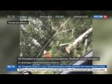Новости на «Россия 24» • Ураган в Псковской области: упавшее дерево раздавило палатку с подростком