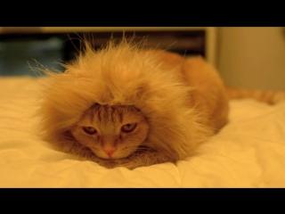 Шапка Лев для кота (Львиная грива для кошки)