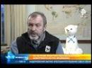 Белая медведица была взорвана взрыв пакетом подсунутым в еду люди хуже животных