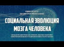 Сергей Савельев. Социальная эволюция мозга человека
