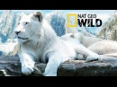 The Rare and Exotic Animals National Geographic Documentary