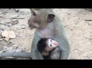 Monkey cry - Teenage monkey kidnapped baby monkey - Baby monkey cry part 5 The End