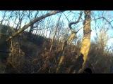 Пара охот на фазана 2016г,с ЭБ Джекки