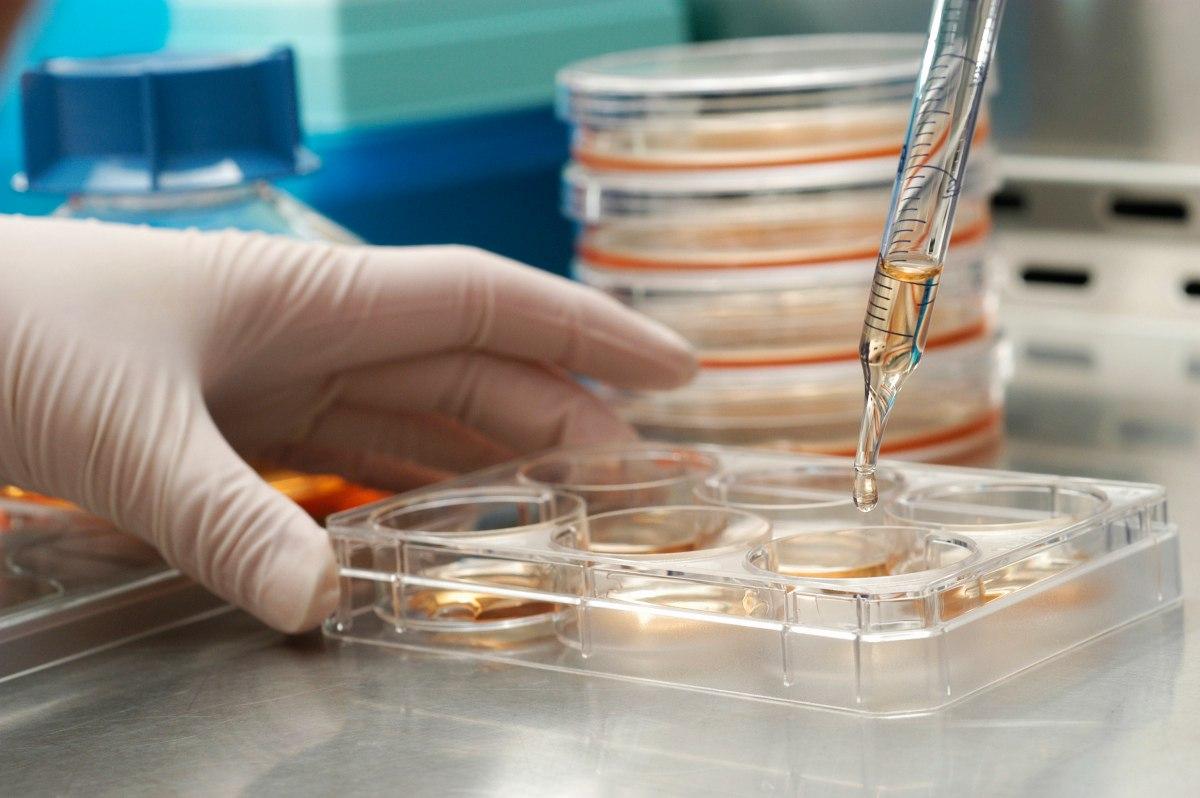Введение в взрослые стволовые клетки