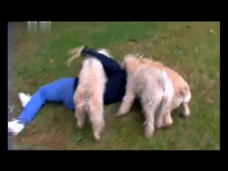 «Введение в собаковедение» (08 серия) (Научно-популярный, животные, 2008)