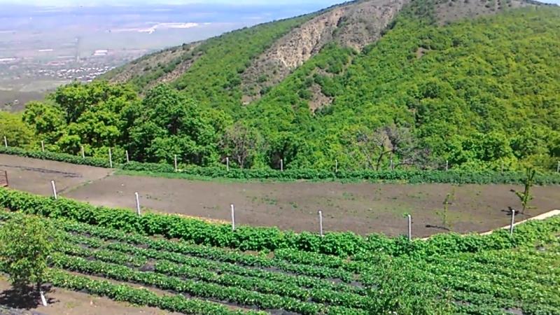 Алазанская долина, Бодбе
