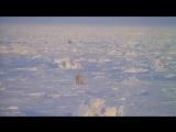 Ландшафты и природа мира Потрясающий фильм! HD Советую всем