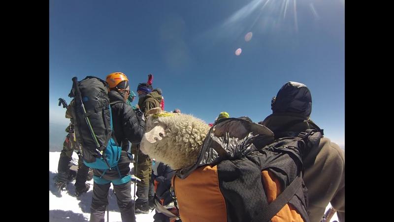 Баран на вершине Эльбруса