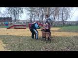 Коррекционные соревнования (охрана хозяина, охрана предмета, дрессировка собак)