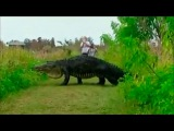Вприродном парке Флориды гигантский аллигатор перешел дорогу туристам. Новости. Первый канал