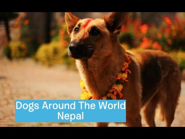 Dogs Around The World: Nepal