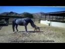 Пример поведения лошади с объяснениями