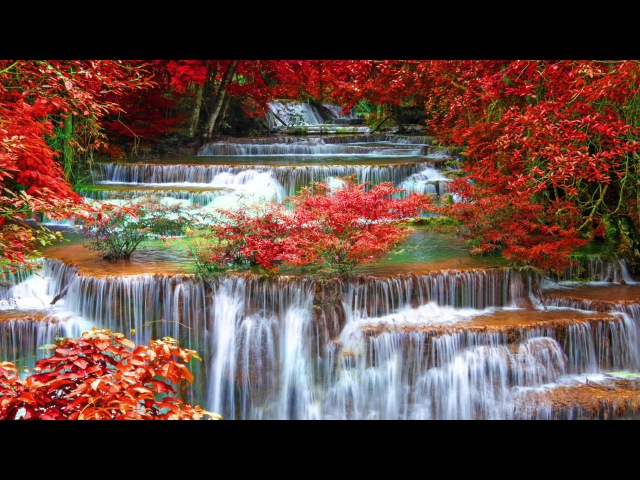 45 minutes of the Best Traditional Japanese Music - Relaxing Music for Stress Relief and Healing