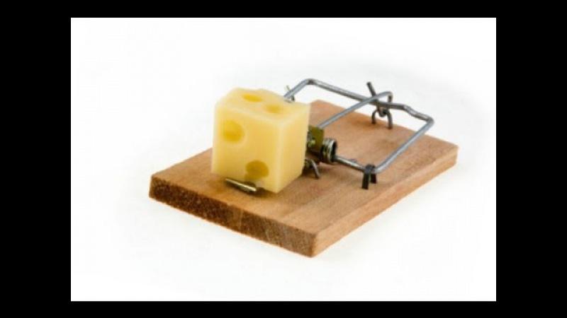 Как сделать сыр в мышеловке действительно бесплатным